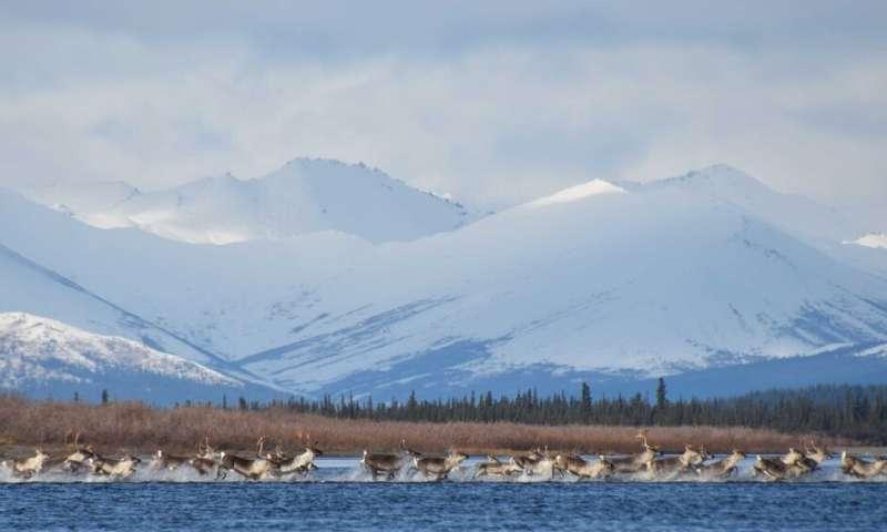 La ecología animal a escala global revela cambios de comportamiento en respuesta al cambio climático