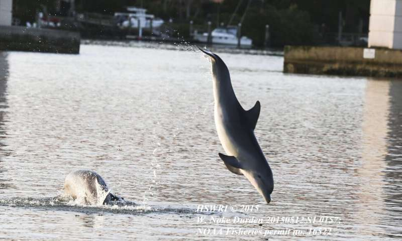 Good night? Satellite data uncovers dolphins on the move at nighttime