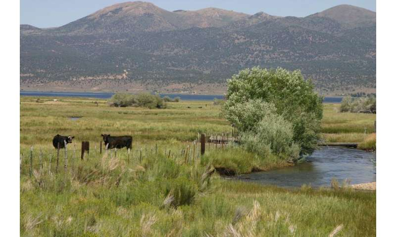 Grazing and Riparian Restoration Are Compatible When You Put in the Work