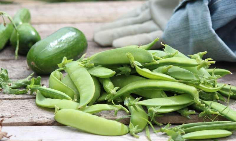 Great time to try: starting a vegetable garden