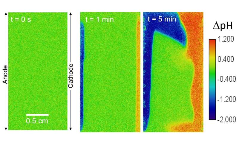 Green hydrogen: Buoyancy-driven convection in the electrolyte