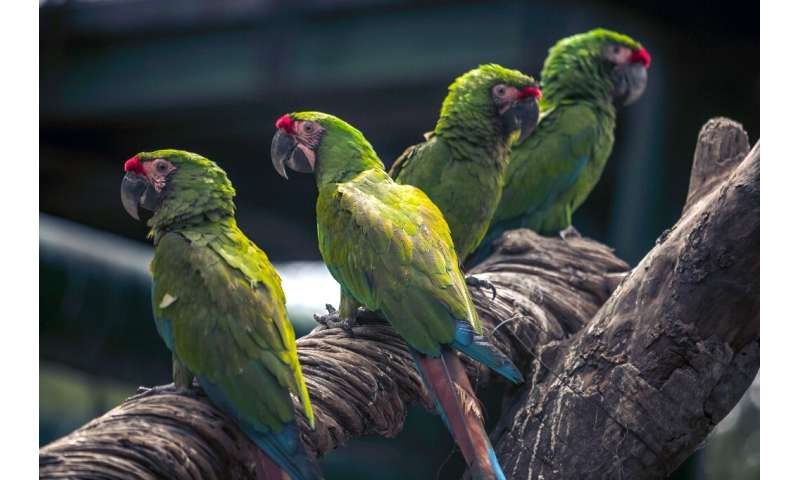 Green macaws were seized by Mexican authorities during a raid to prevent animal trafficking