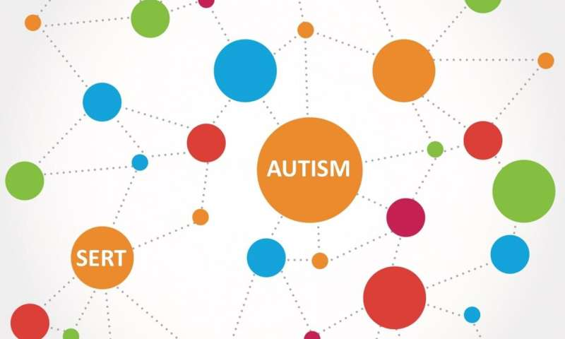 Guilt by dissociation: Study sheds light on serotonin in autism