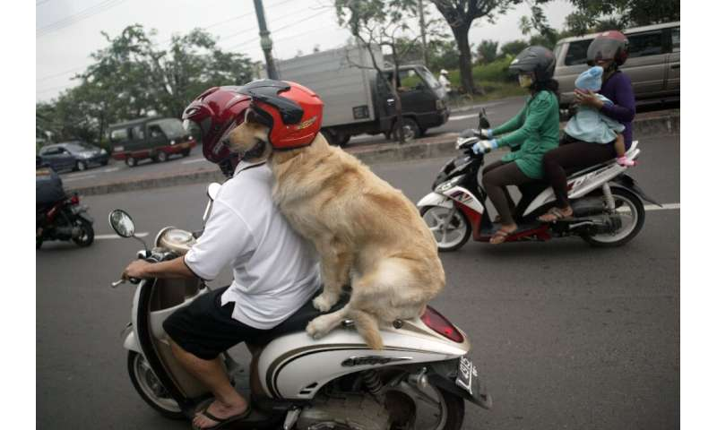 Handoko Njotokusumo and Ace ride through traffic during their weekend joy ride on a motorcycle in Surabaya, Indonesia