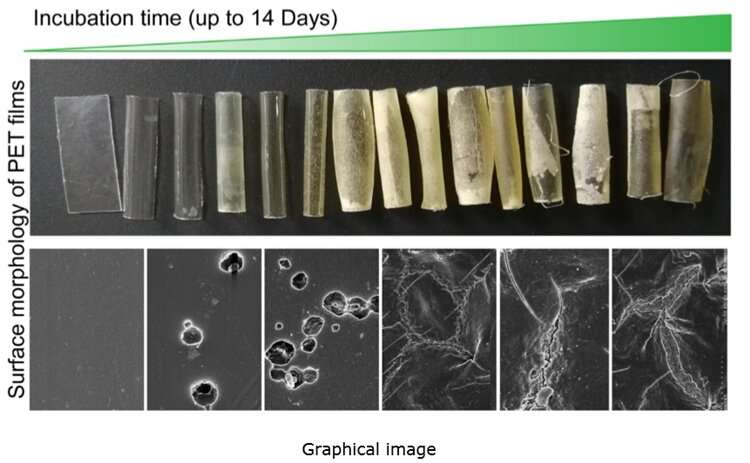 Heat-friendly microbes provide efficient way to biodegrade plastic