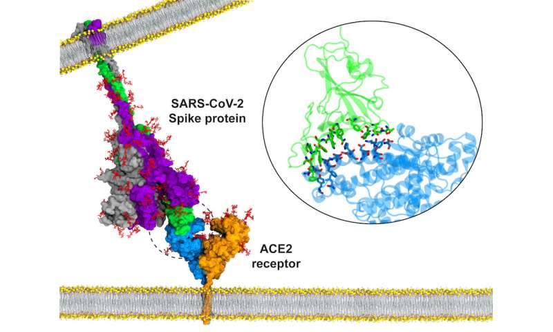 Hidden states of the COVID-19 spike protein