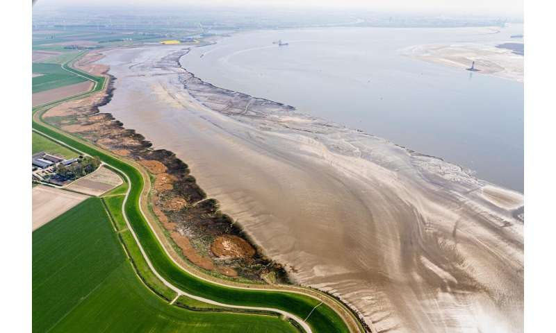 Historic floods reveal how salt marshes can save lives in the future