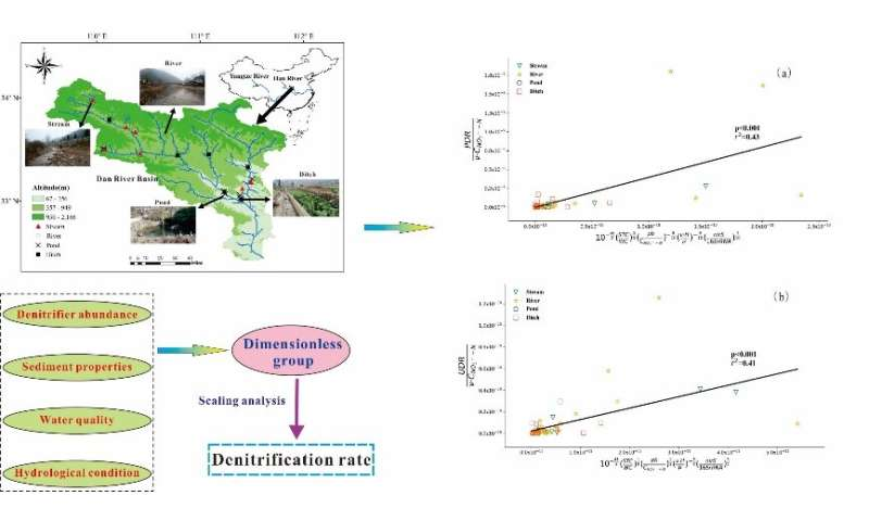 How biotic and abiotic factors regulate the sediment denitrification rate among wetland types