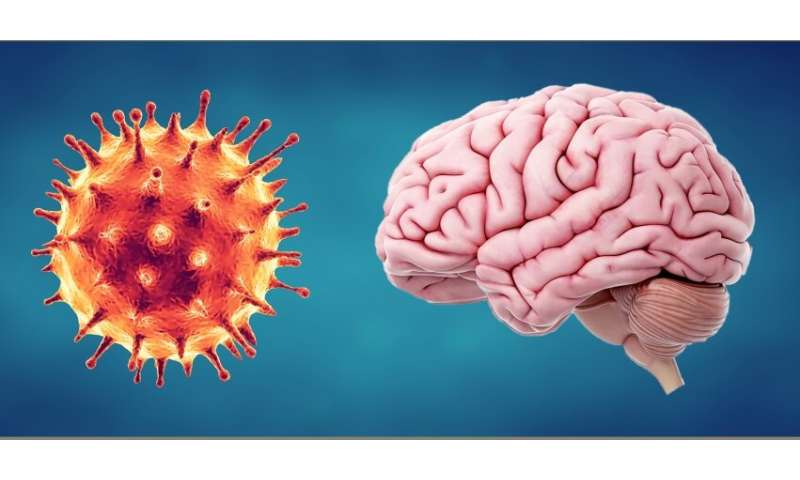 How could COVID-19 and the body's immune response affect the brain?