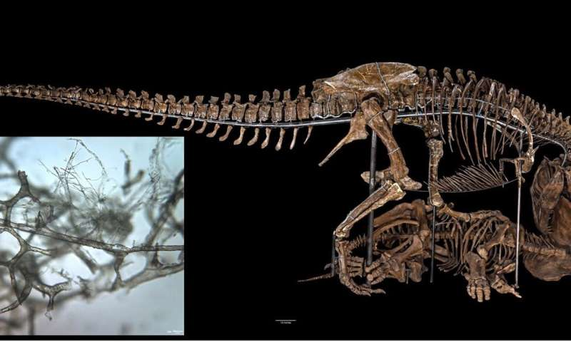 How dinosaur blood vessels are preserved through the ages