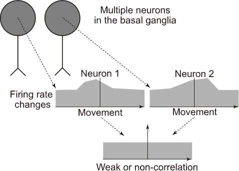 How do basal ganglia neurons convey information for the control of voluntary movements?