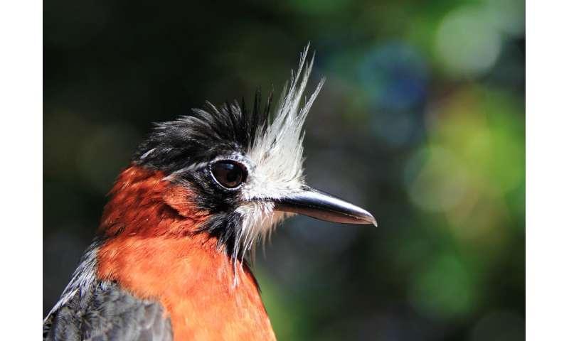 How does habitat fragmentation affect Amazonian birds?