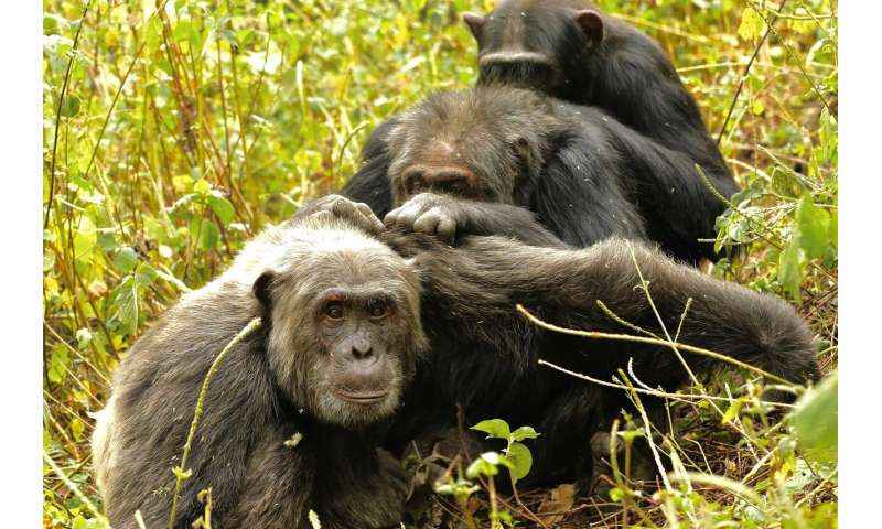 How'd we get so picky about friendship late in life? Ask the chimps