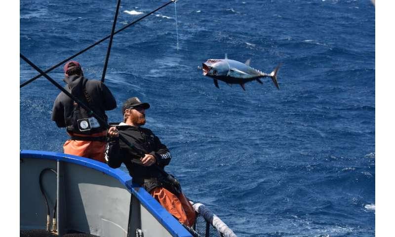 Cómo los pescadores se han adaptado al cambio en los últimos 35 años o más