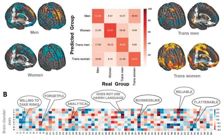 How many gender subtypes exist in the brain?
