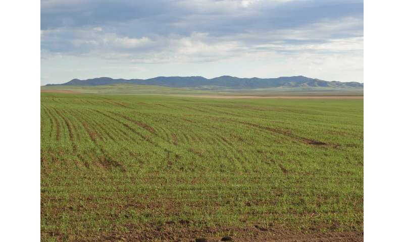 How millets sustained Mongolia's empires