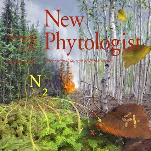 How mosses and climate are shaping the fate of nitrogen in the boreal