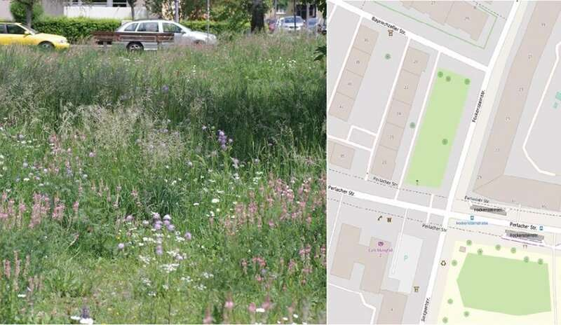 How quickly do flower strips in cities help the local bees?