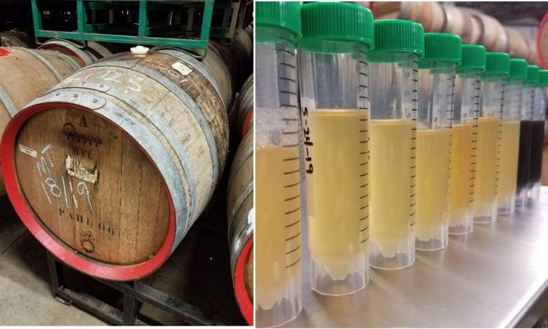 How sour beer gets so... sour (video)