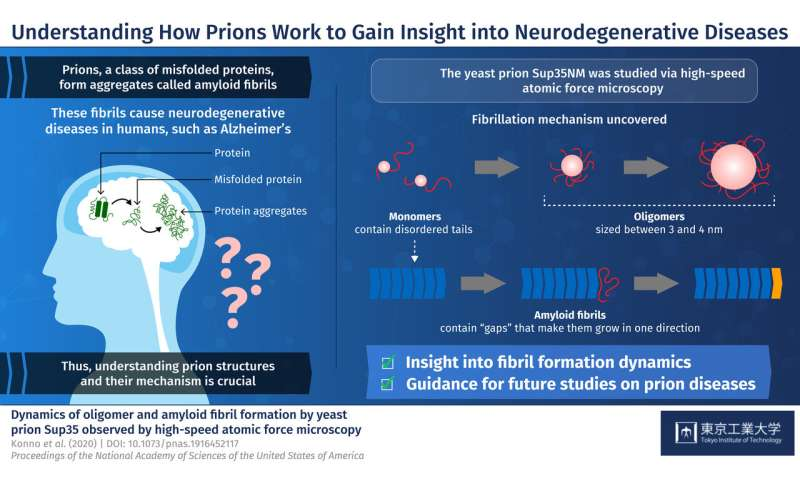 How understanding the dynamics of yeast prions can shed light on neurodegenerative diseases