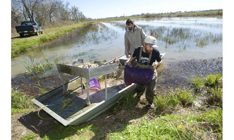 How weather affects crawfish harvests
