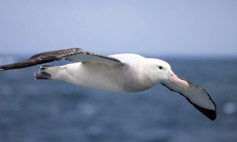 How we recruited albatrosses to patrol the high seas for illegal fishers