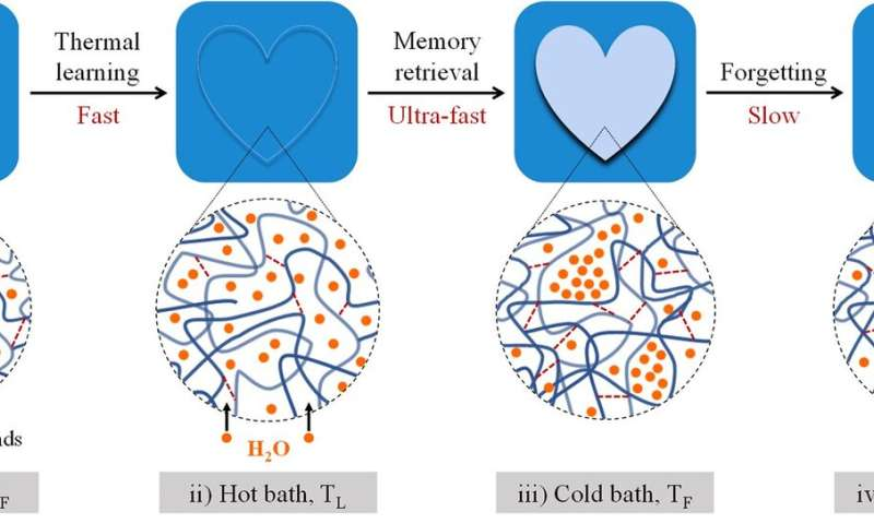 Hydrogel mimics human brain with memorizing and forgetting ability