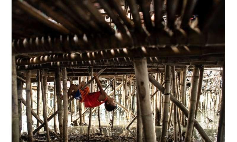 Si el bambú se calienta en el microondas, se vuelve el doble de fuerte