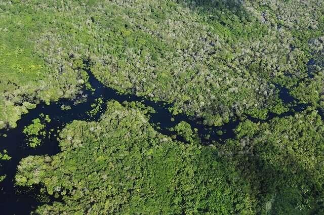 Impact of effort to reduce Amazon deforestation overestimated, study finds