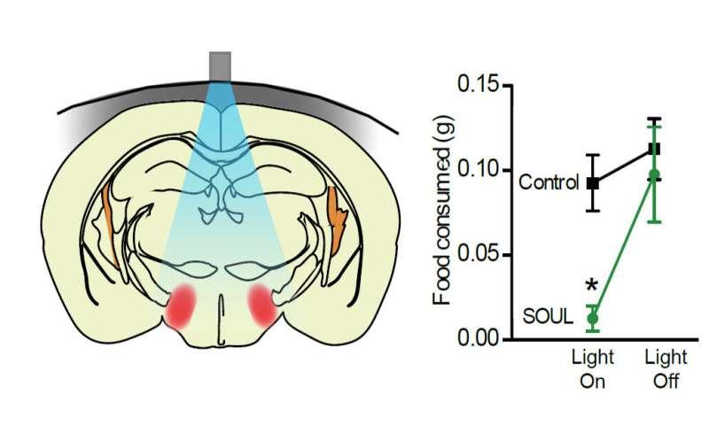 Implant-free optogenetics minimizes brain damage during neuronal stimulation