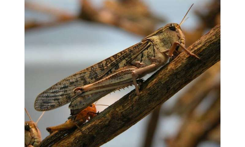 Insects could help increase Europe's food self-sufficiency but will they catch on?