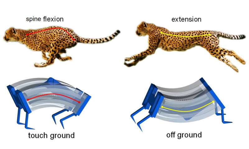 Inspired by cheetahs, researchers build fastest soft robots yet