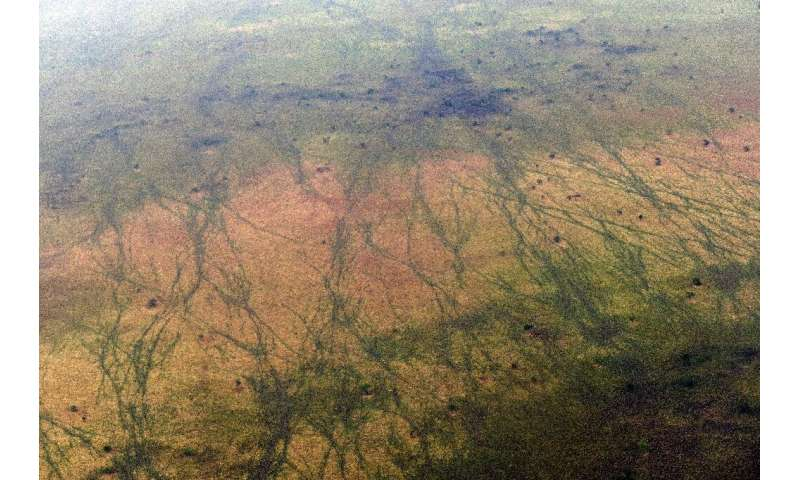 Intertwining hoof paths by a million migrating antelope across the underexplored landscape of South Sudan