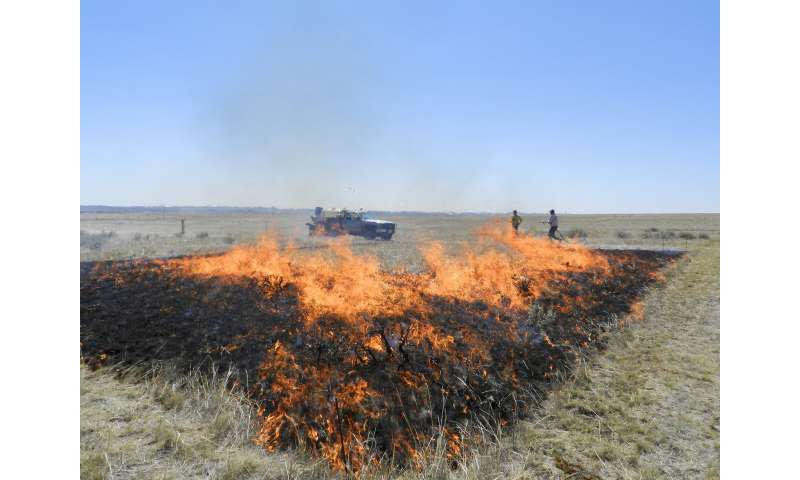 Is mowing or close grazing of rangelands as beneficial as prescribed burning?