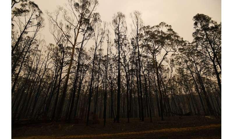 Los hábitats pueden tardar hasta 40 años en volver a la normalidad.