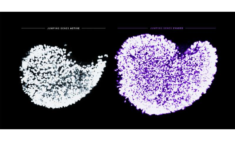 Jumping genes threaten egg cell quality