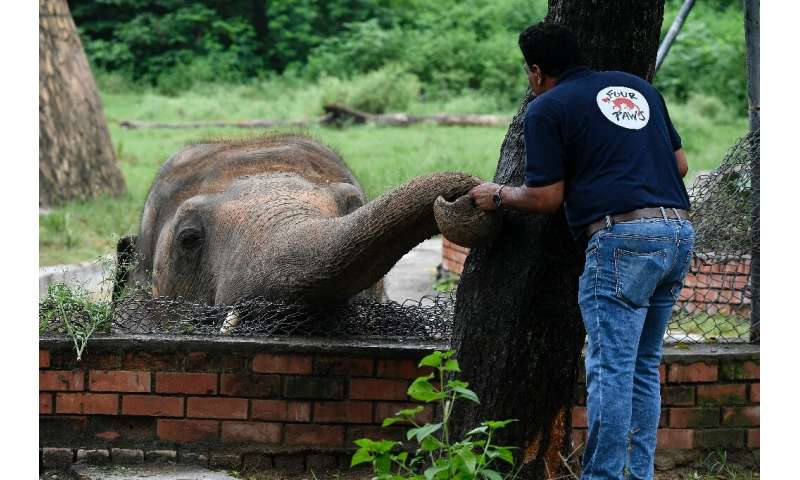 Kaavan's mate Saheli died of gangrene in 2012 and it is hoped the elephant might find a new partner once he is moved to Cambodia