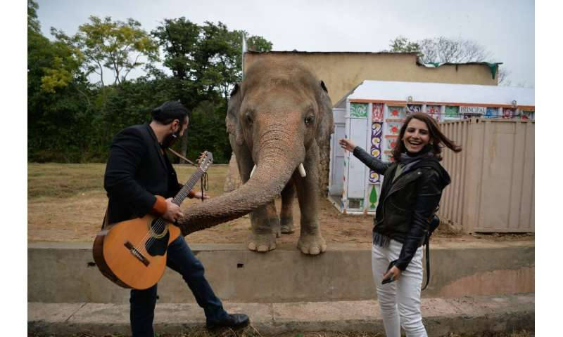 Kavaan was serenaded with music and spoilt with treats ahead of his relocation to a sanctuary in Cambodia