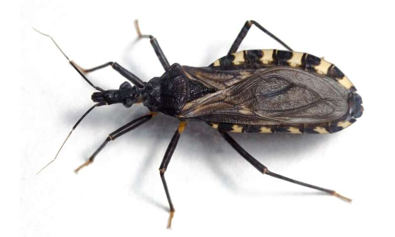 Kissing bugs also find suitable climatic conditions in Europe