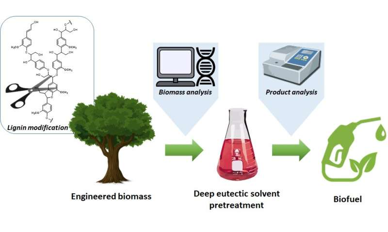 KIST develops biofuel production process in cooperation with North American researchers