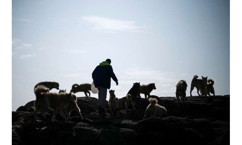 Kunuk Abelsen, a 27-year-old musher arrives at the island where his dogs are kept near Kulusuk, Greenland