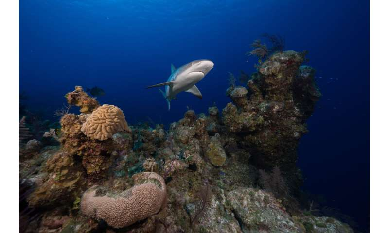 Large marine parks can save sharks from overfishing threat