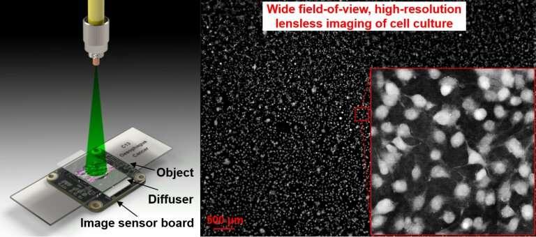 Lensless on-chip microscopy platform shows slides in full view