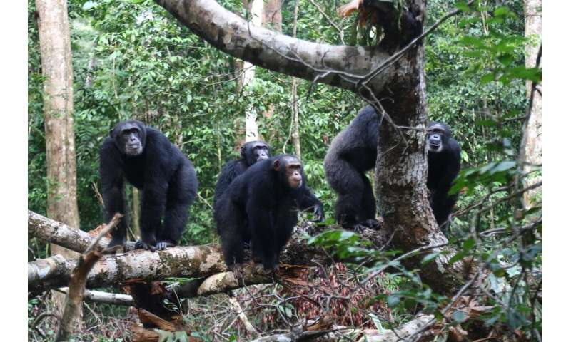 Less offspring due to territorial conflicts