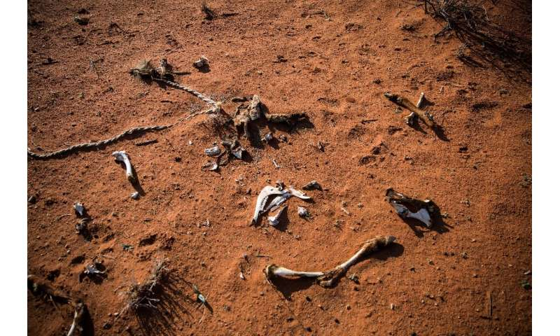 Lethal drought: The bones of an animal lie on the ground of the Thuru Lodge game farm near Groblershoop, South Africa