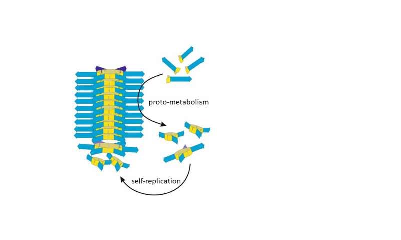 Life-emulating molecules show basic metabolism