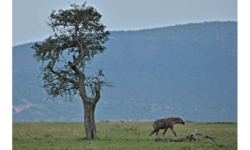 Maasai Mara's entire reserve model is under threat