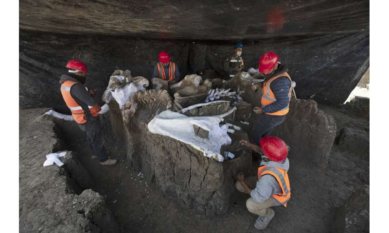 'Mammoth central' found at Mexico airport construction site