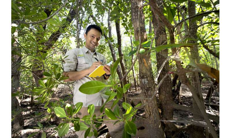 Mangroves could turn tide on carbon output