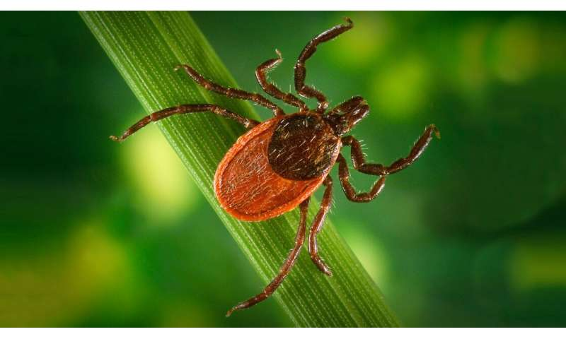 Many lyme disease cases go unreported; A new model could help change that